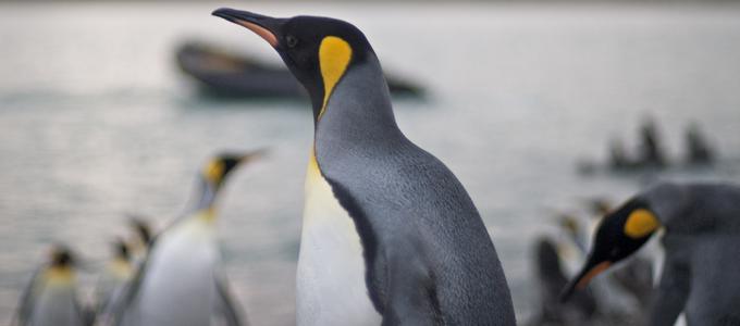 SEO, Google Pingüin, Pingüin 3.0, PNB, Plugins de bloqueo de rastreadores