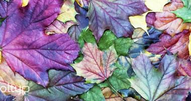¡Bienvenido otoño! Tendencias de diseño web. Diseño Web., Otoño, Tendencias, Tendencias Diseño, Desarrollo Web